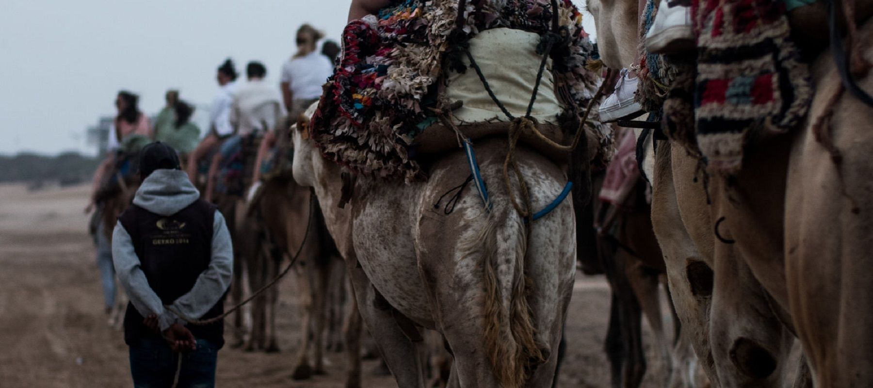 kamelenrit marokko